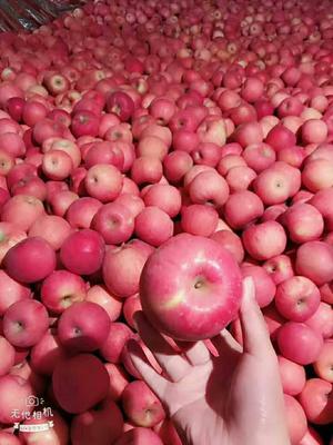 这是一张关于红富士苹果 80mm以上 片红 纸袋的产品图片