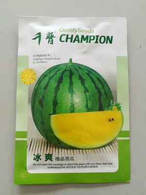 河南省郑州市惠济区黄壤西瓜种子 二倍体杂交种 ≥97%