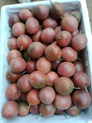 这是一张关于台农二号百香果 统货的产品图片