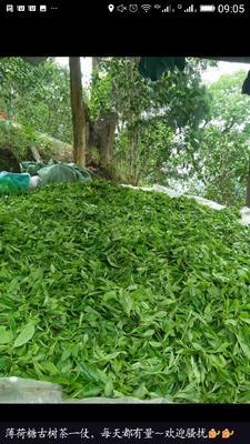 这是一张关于普洱乔木茶 礼盒装 一级的产品图片