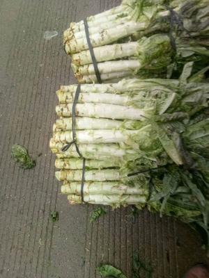 这是一张关于红叶香莴苣 1.0~1.5斤 50-60cm的产品图片