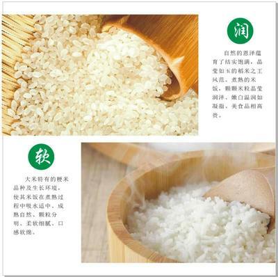 吉林省长春市二道区稻花香二号大米 一等品 一季稻 粳米