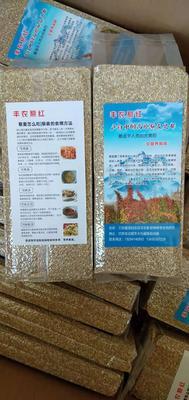甘肃省武威市天祝藏族自治县白藜麦