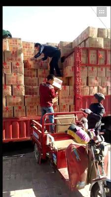这是一张关于新疆大枣 一级的产品图片