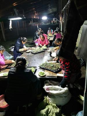 安徽省宿州市埇桥区早佳8424西瓜种子 亲本(原种) ≥99%