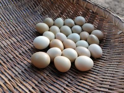 湖北省宜昌市夷陵区野鸡蛋  食用 简包装 江西,南昌野鸡蛋