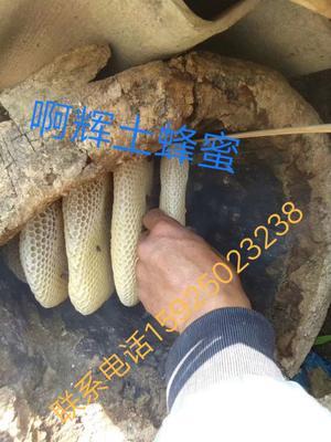 云南省保山市施甸县土蜂蜜 塑料瓶装 2年以上 100%
