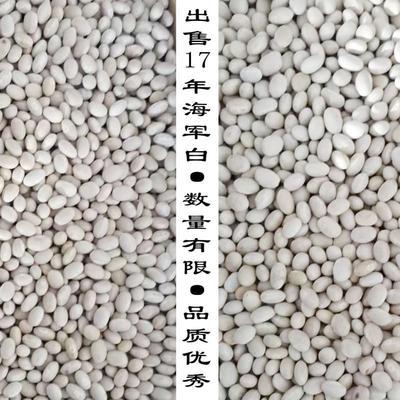 黑龙江省齐齐哈尔市依安县海军白