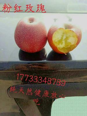 这是一张关于秦冠苹果 75mm以上 全红 光果的产品图片