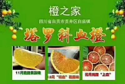 这是一张关于塔罗科血橙 65 - 70mm 4两以下的产品图片