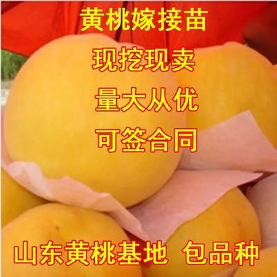 杩欐槸涓�寮犲叧浜庨敠缁i粍妗冭嫍 0.5~1绫崇殑浜у搧鍥剧墖