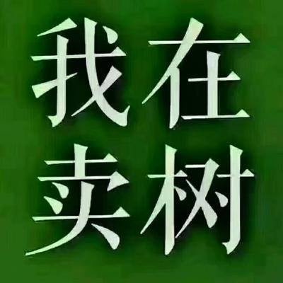 河南省周口市西华县楸树