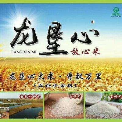 黑龙江省鸡西市密山市东北大米 一等品 一季稻 粳米