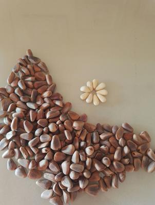这是一张关于东北松子 6-12个月 散装的产品图片