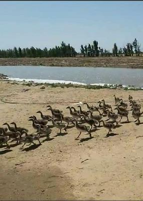 内蒙古自治区通辽市奈曼旗鸿雁