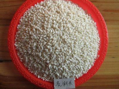 云南省昆明市东川区桂朝大米 一等品 晚稻 粳米