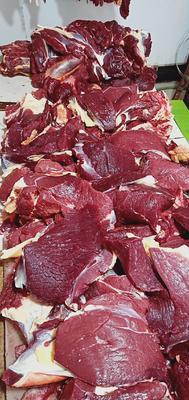 甘肃省武威市天祝藏族自治县牛肉类 生肉