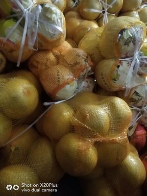 这是一张关于琯溪蜜柚 1.5斤以上的产品图片