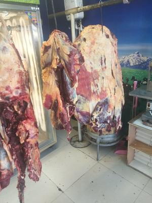 甘肃省张掖市肃南裕固族自治县藏族牦牛肉 生肉