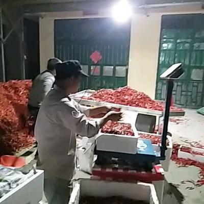 这是一张关于小米椒 5~10cm 红色 特辣的产品图片