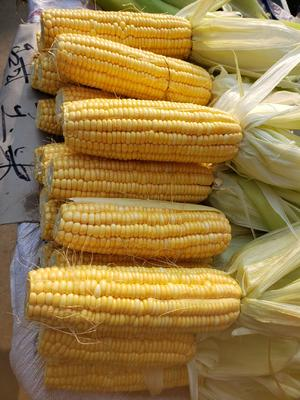 江苏省南京市江宁区甜玉米 带壳 甜