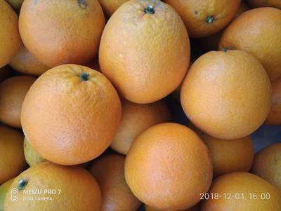 这是一张关于纽荷尔脐橙 75 - 80mm 4-8两的产品图片