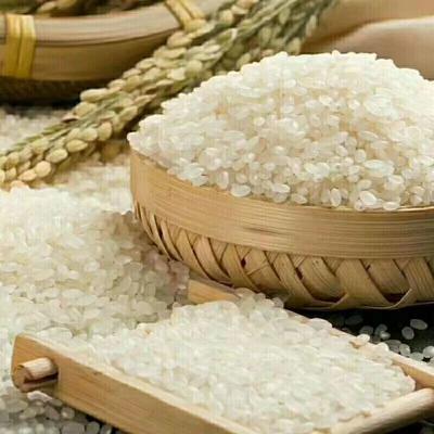 这是一张关于盘锦大米 一等品 一季稻 粳米的产品图片
