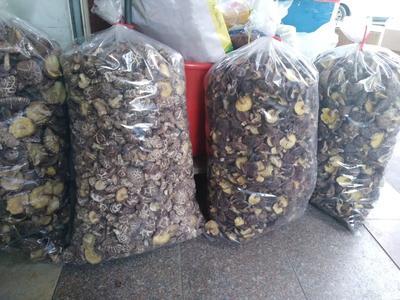 福建省龙岩市长汀县野香菇干 袋装 1年以上