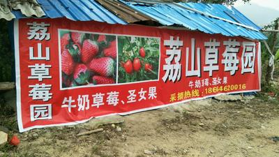 这是一张关于妙香草莓 20克以上的产品图片