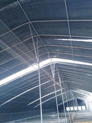 宁夏回族自治区银川市贺兰县玻璃温室大棚