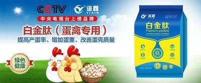 这是一张关于贝壳粉的产品图片