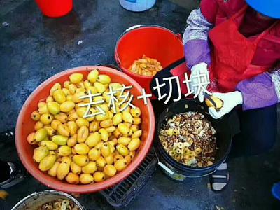 福建省漳州市南靖县枇杷膏制品 12-18个月