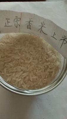 这是一张关于香米 一等品 一季稻 籼米的产品图片