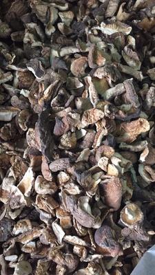 江苏省徐州市云龙区普通干香菇 散装 1年