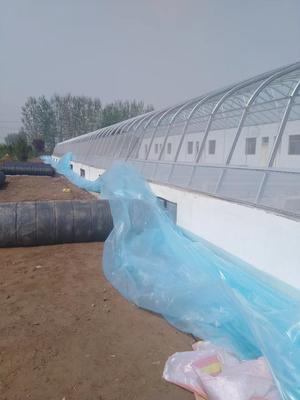 宁夏回族自治区银川市永宁县玻璃温室大棚