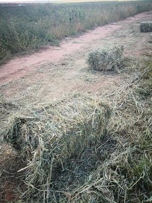 内蒙古自治区包头市达尔罕茂明安联合旗牧草