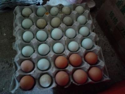 湖北省恩施土家族苗族自治州建始县土鸡蛋 食用 简包装