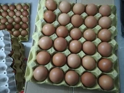 广东省深圳市龙华区普通鸡蛋 食用 箱装
