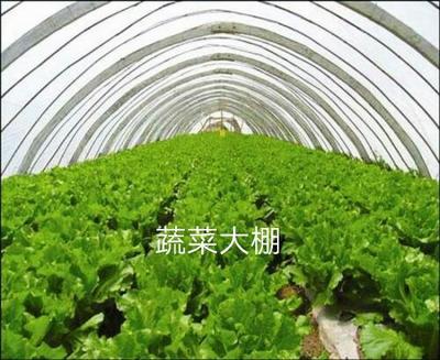 河北省沧州市泊头市蔬菜养殖大棚