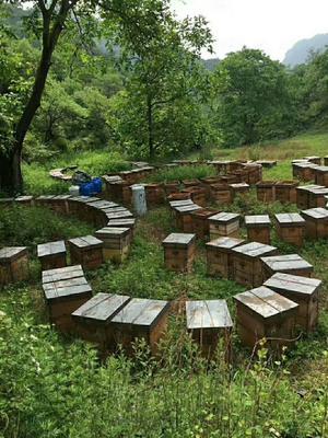这是一张关于土蜂蜜 桶装 2年以上 95%以上的产品图片