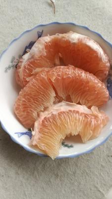 四川省内江市东兴区晚香蜜柚 2斤以上