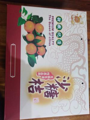 这是一张关于沙糖桔 3 - 3.5cm 1 - 1.5两的产品图片