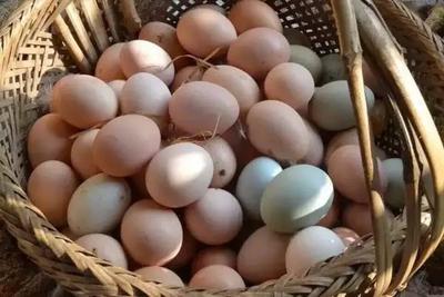 海南省海南省琼海市土鸡蛋 食用 箱装