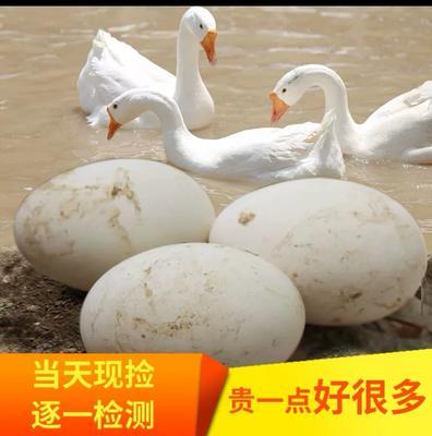河南省许昌市襄城县鲜鹅蛋 食用 散装