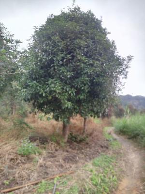 广西壮族自治区贺州市八步区八月桂