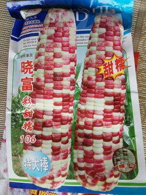 江苏省宿迁市沭阳县玉米种子 单交种 ≥95% ≥99% ≥85% ≤13%