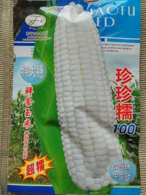 江苏省宿迁市沭阳县玉米种子 单交种 ≥95% ≥99.9% ≥85% ≤13%