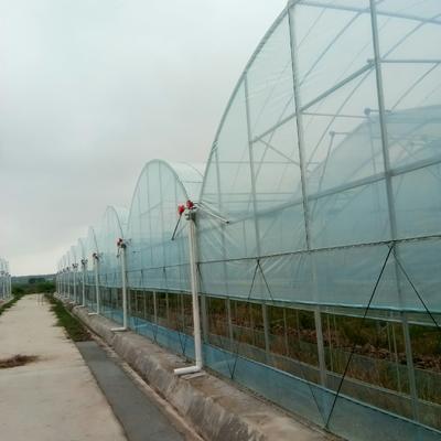 这是一张关于文洛式温室大棚的产品图片