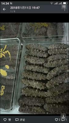 这是一张关于干海参的产品图片