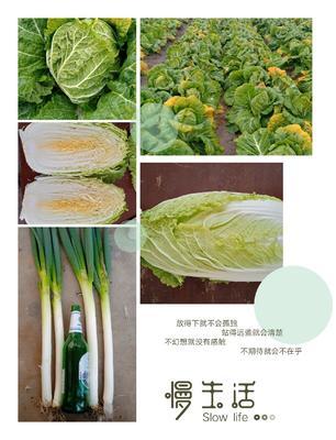 山东省青岛市平度市黄心大白菜 10~15斤 毛菜